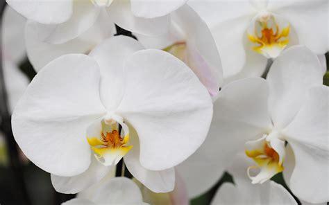 orchids temperature orchid photos orchid temperature