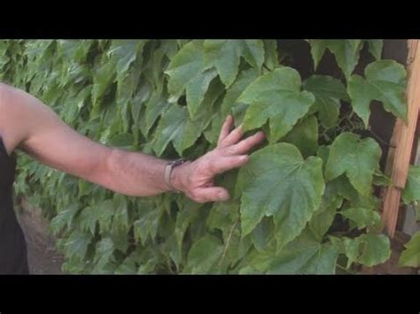 How To Select Climbing Plants Youtube