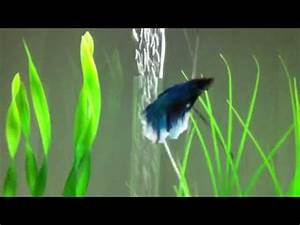 17 Best images about BiOrb Fish Tanks on Pinterest
