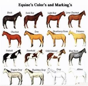 Lockwood Horses August 2011