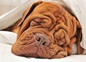 where do wrinkles e from