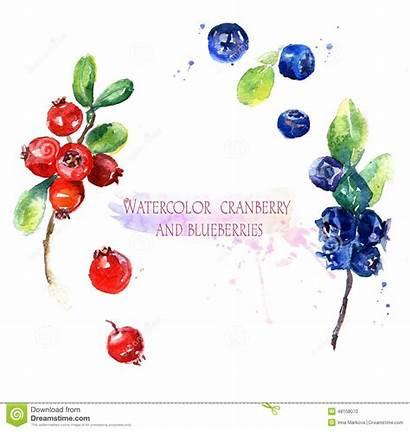 Watercolor Cranberry Blueberries Illustrazione Rosso Bosbessen Waterverfillustratie