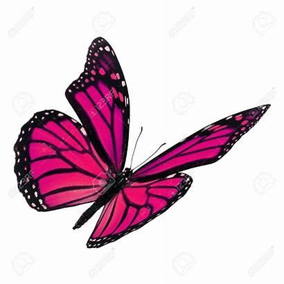 Butterfly Monarch Mariposa Clipart Monarca Rose Hermosa
