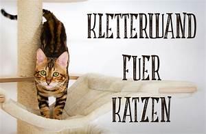 Sisalteppich Für Katzen : ein catwalk f r unseren bengal kater catwalk diy kletterwand f r katzen ~ Orissabook.com Haus und Dekorationen