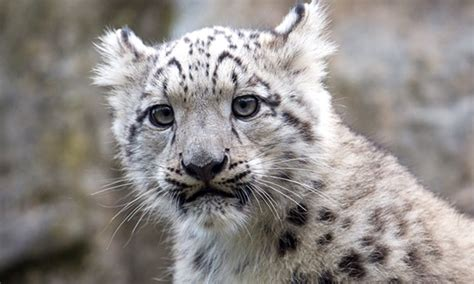 groupon kölner zoo eintritt k 246 lner zoo und aquarium k 246 lner zoo groupon