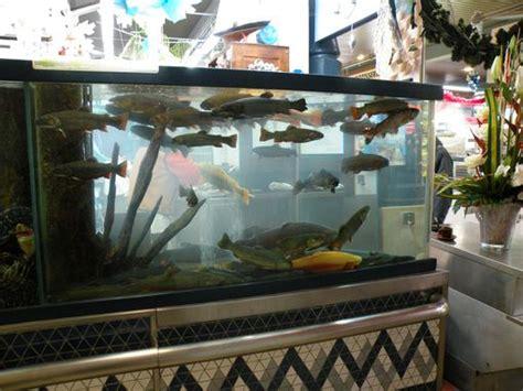 aquarium de truites march 233 couvert troyes en photo