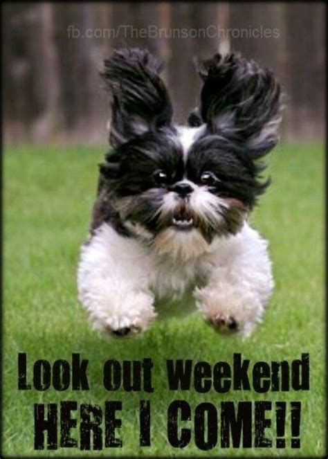 lookout weekend funny cute dog weekend funny quotes days
