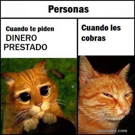 Memes De Gatos - memes chistosos de gatos memes pinterest