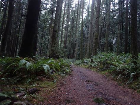 bridle trails state park running