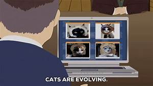 Confused Cats GIF by South Park - Find & Share on GIPHY