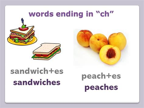 Plural Nouns Add Es To Words Ending In Ch, Sh, S, Ss And