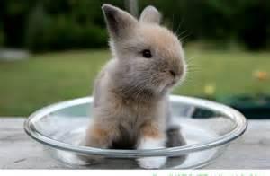 Cute Fluffy Baby Bunnies