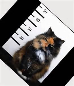 cat jokes for cat jokes