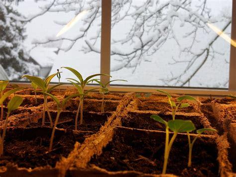 A Garden Of Antietam Snow And Seedlings