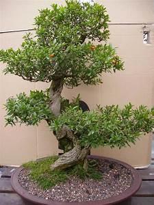 stamme kleinanzeigen pflanzen garten dhd24com With garten planen mit deko bonsai kunststoff