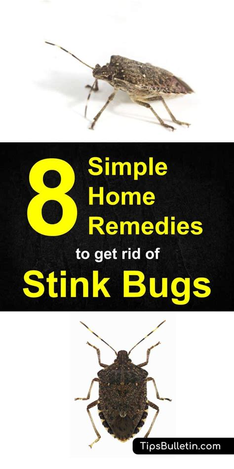 how to get rid of bugs in your garden how to get rid of stink bugs 8 simple home remedies