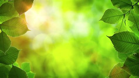 natural frame  beautiful green stock footage video