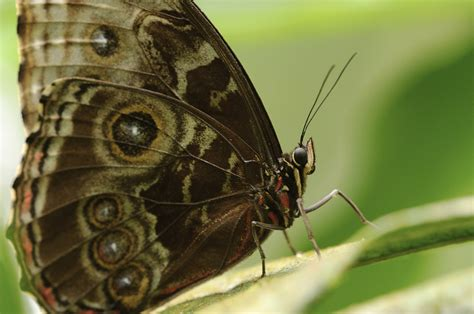 butterfly macro stock photo freeimagescom
