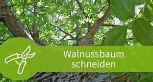 Alten Walnussbaum Schneiden : rhododendron schneiden 3 schnitte f r den bl tenstrauch ~ Lizthompson.info Haus und Dekorationen