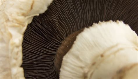 Mushroom Hunting In Georgia Sciencing