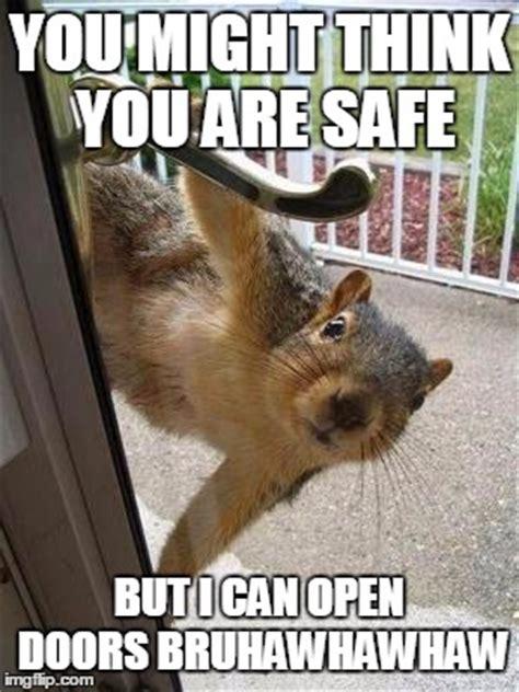 murder squirrel imgflip