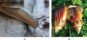18.1: How Animals Reproduce - Biology LibreTexts