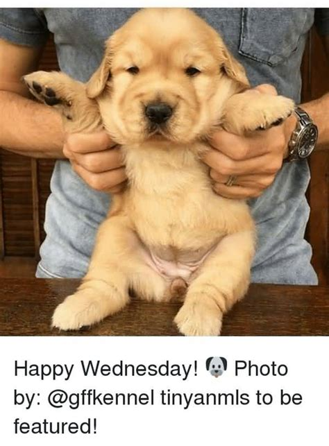 50 Funny Wednesday Meme That Make You Smile | QuotesBae