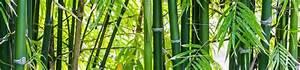 Bambou En Pot Pour Terrasse : planter un bambou en pot gamm vert ~ Louise-bijoux.com Idées de Décoration