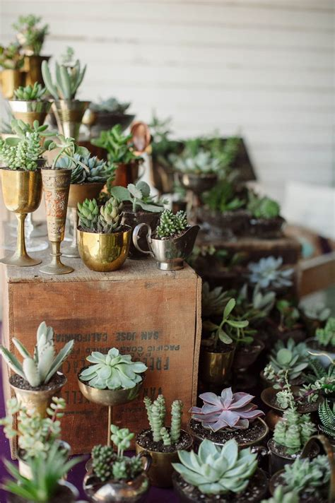 25 Best Ideas About Succulent Wedding Favors On Pinterest