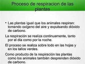 Respiracion de las plantas for Como es el proceso de convertirnos en