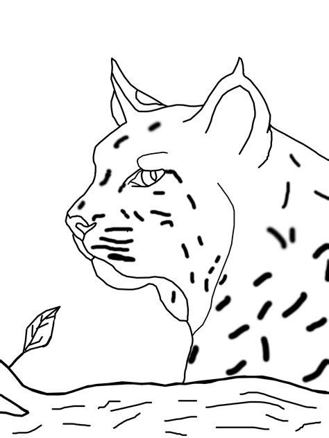 bobcat coloring pages    print