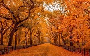 秋天唯美的落叶风景高清桌面壁纸下载 -桌面天下(Desktx.com)