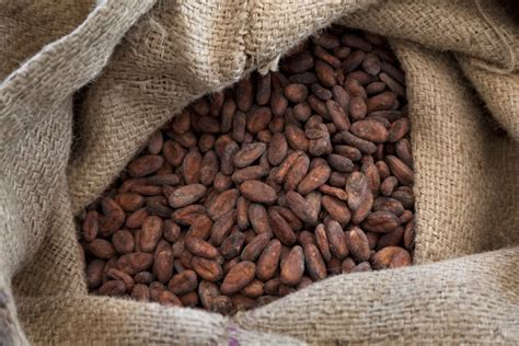 Green coffee beans are coffee in it's raw raw state. Cocoa bean importer to create jobs at new warehouse