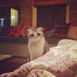 Meet Taylor Swift's Cats- Olivia Benson and Meredith Grey ...