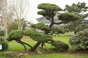 Kleine Bäume Für Den Garten : garten hinrei end b ume f r den garten ideen baum vorgarten immergr n immergr ne b ume f r den ~ Markanthonyermac.com Haus und Dekorationen