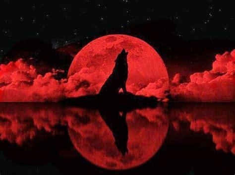 wolf night blood eclipse   wolf  wolf