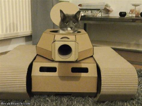 cute cats  cardboard tanks  pics breakbrunch