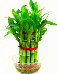 4 Most Preferred Lucky Plants For Home  U0026 Office D U00e9cor