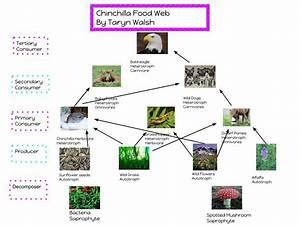 Chinchilla Food Web