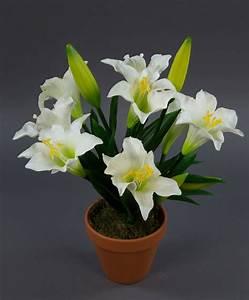 Lilie Topfpflanze Kaufen : lilien im topf lilien pflanzen lilien pflanzen ~ Lizthompson.info Haus und Dekorationen