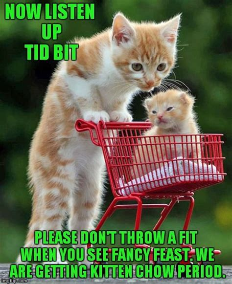 Cute Cat Meme Generator - parenting now listen up tid bit please don t throw a fit when you see fancy feast we are