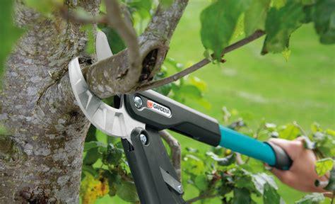 apfelbaum schneiden selbstde
