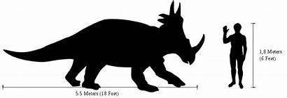 Styracosaurus Human Comparison Dinosaur Svg Dinosaurs Compared