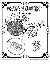 Spanish Cantaloupe Coloring Education Pages Fruits Vegetables Worksheet English Fruit Zucchini Learning sketch template