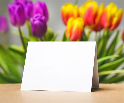 images flower petal tulip decoration spring