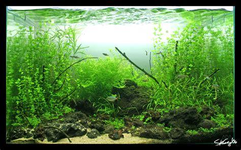 aquascape wallpaper aquascape naupaka coast 3 wk by stevenchong no gmf on