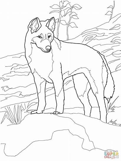 Dingo Coloring Australia Pages Printable Animals Supercoloring