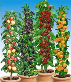 Obst Mit L : s ulen obst rarit ten kollektion 4 pflanzen g nstig online kaufen mein sch ner garten shop ~ Buech-reservation.com Haus und Dekorationen