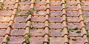Traitement Anti Mousse : traitement anti mousse d une toiture pourquoi quand ~ Farleysfitness.com Idées de Décoration