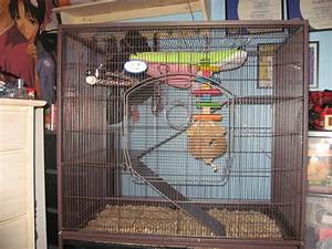 Chinchilla Cage Ideas | Car Interior Design